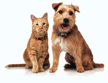 Magicvets, pet care services in Noida, Delhi, Ghaziabad, Gurgaon